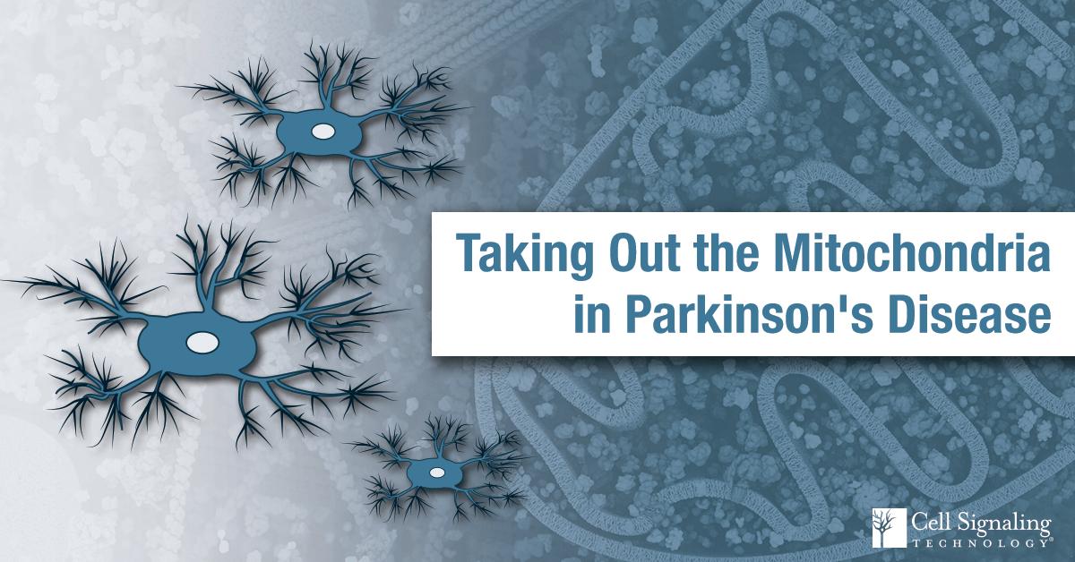 19-PRO-92632-Parkinson-Proteomics-Blog-1600x800