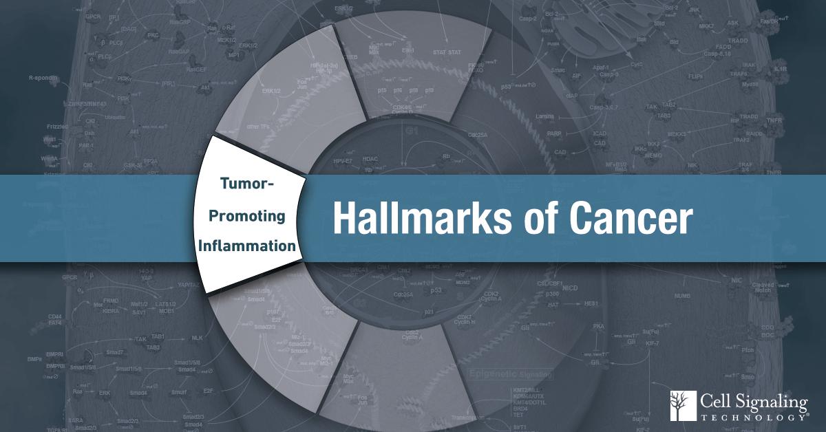 18-CEL-47990-Blog-Hallmarks-of-Cancer-Tumor-Promoting-Inflammation-9