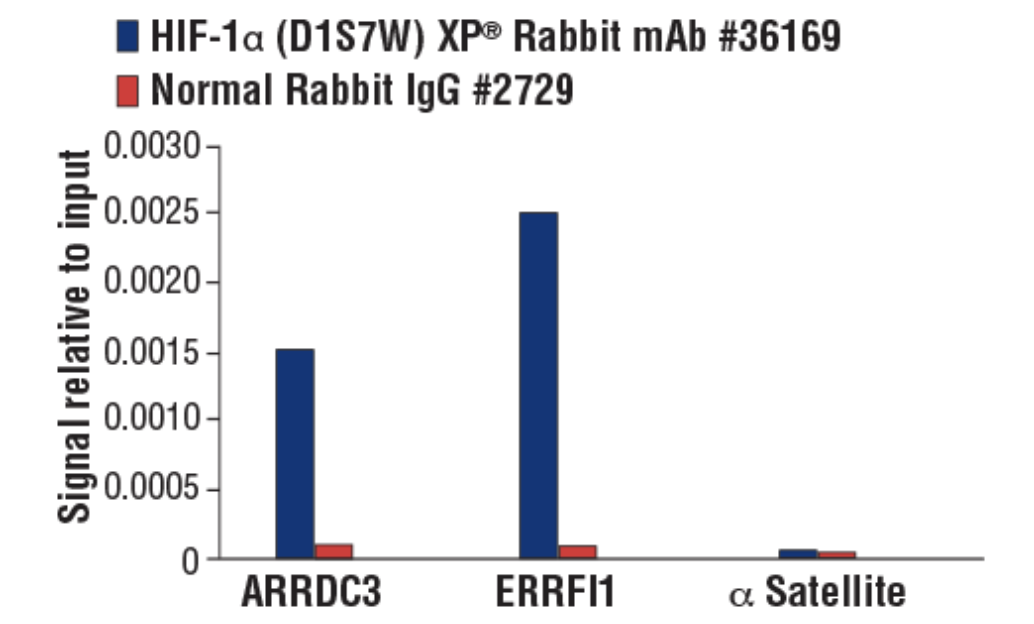CST 抗体:HIF-1α (D1S7W) XP® Rabbit mAb